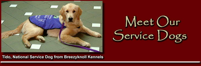 Tido, National Service Dog from Breezyknoll Kennels